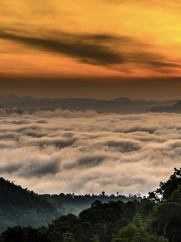 Letenky na Srí Lanku o prázdninách