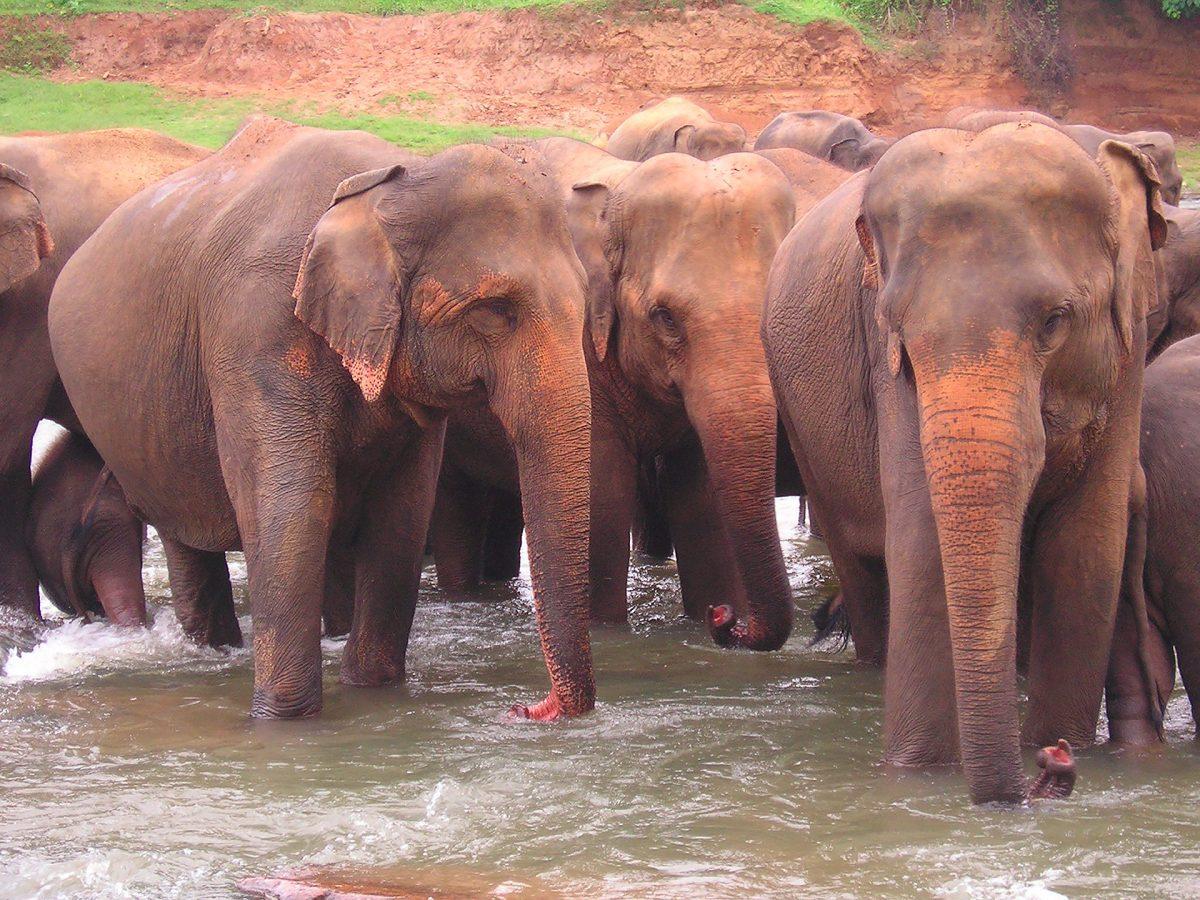 Minneriya - národní park, Srí Lanka