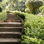 Peradeniya Botanic Garden