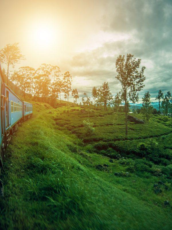 Akční letenky na Srí Lanku za 14 121 Kč Kč