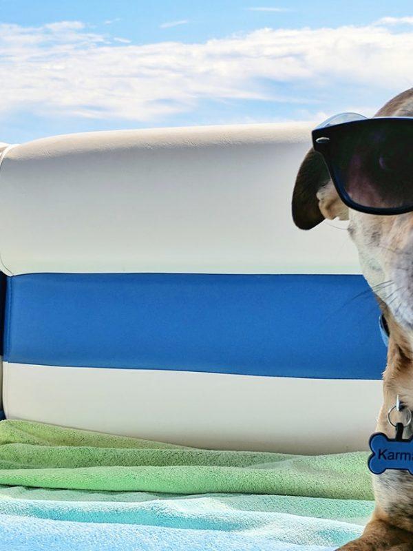 Cestovní pojištění pro psa a kočku na dovolenou