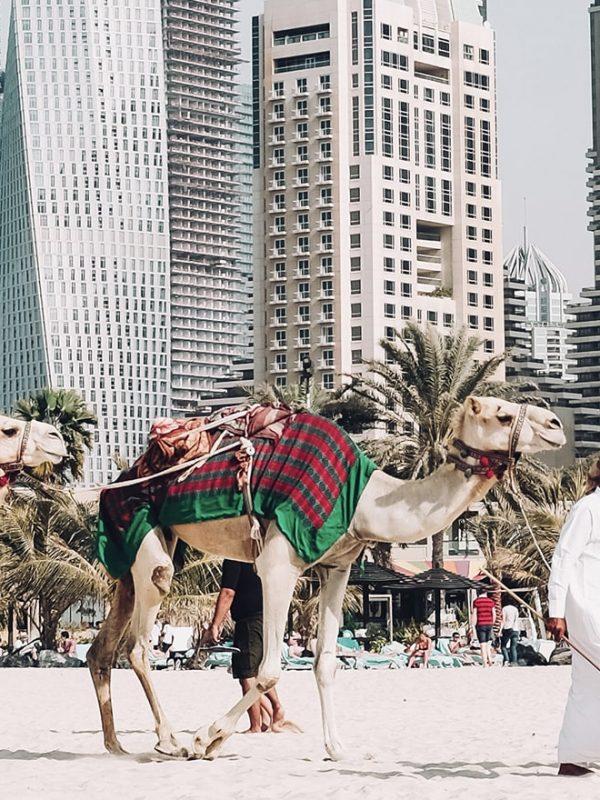 Letenky do Dubaje, covid, podmínky